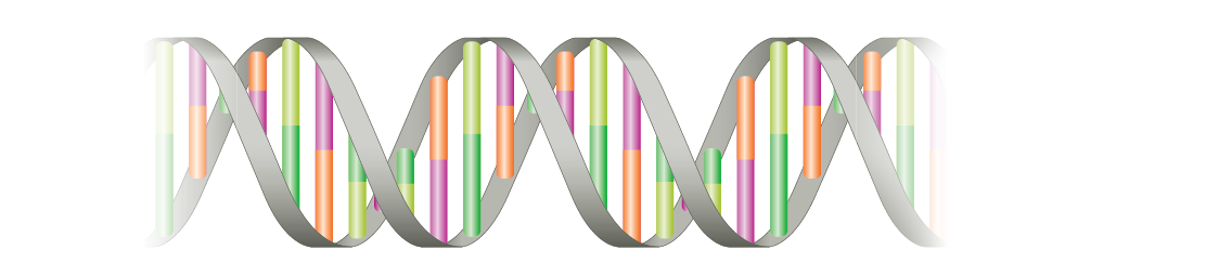 The First Robust Genetic Markers for ADHD Are Reported