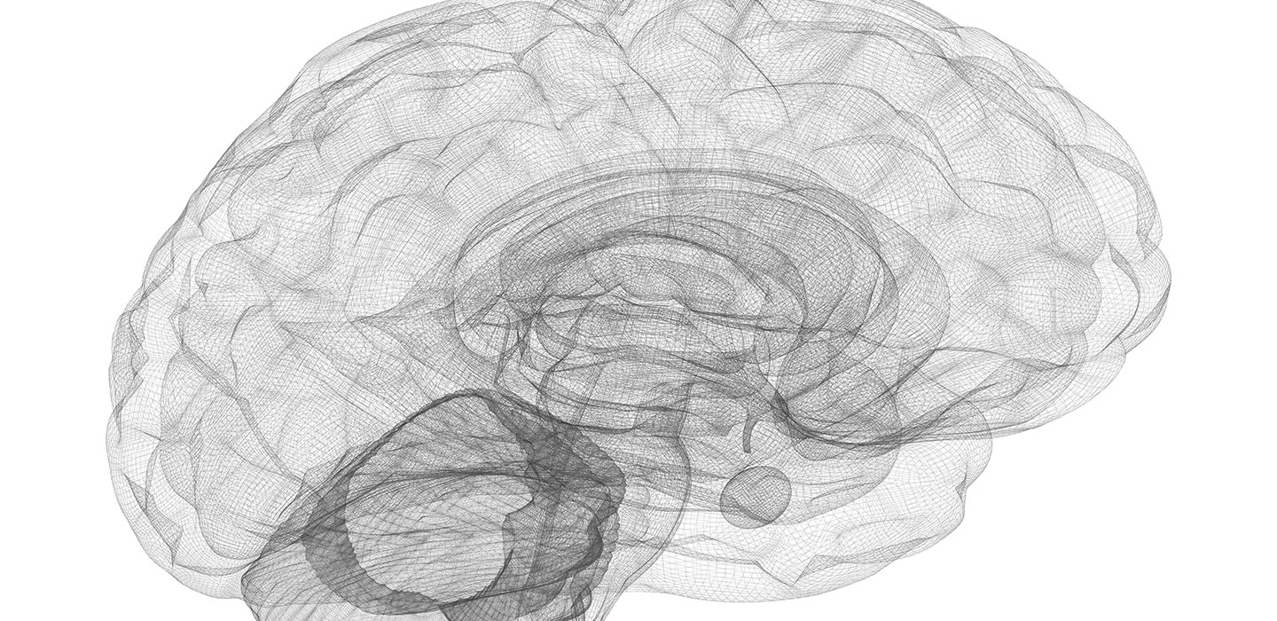 Parts of the brains hippocampus are diminished in size in people wireframe of the human brain ccuart Gallery
