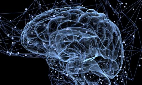 New Technique Lets Researchers Watch Human Brain Circuits Begin to Wire-Up