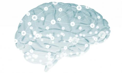 A Rarely Studied Brain Structure Provides New Clues About Psychosis