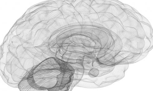 Wireframe of the human brain