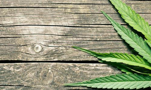 Largest Genome Study to Date of Cannabis Use Disorder Reveals New Genetic Underpinnings