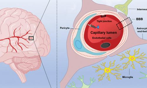 How COVID Infection May Damage the Brain and Affect Mental Illness Symptoms & Mortality