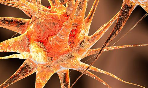 Using Stem-Cell Technology, Researchers Succeed in 'Growing' a Working Blood-Brain Barrier