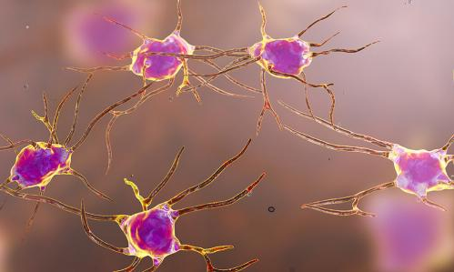 Researchers Discover a Role for Immune Cells Called Microglia in Inhibiting Brain Activity and Regulating Behavior