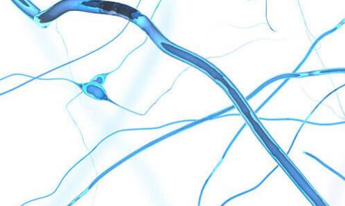 Neuroplasticity - brain's plasticity