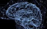 How the Brain Processes Fear
