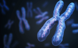 Team Reports on Search for Genetic Subgroups Within Depression
