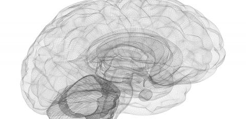 Shrinking of Hippocampus in Bipolar Disorder Patients
