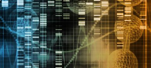 Researchers Track Gene Alterations in Brain Area Perturbed by Stress