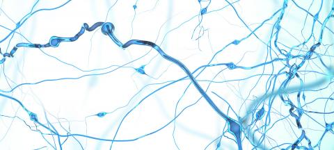 Researchers Trace Anxiety Control to Specific Brain Region