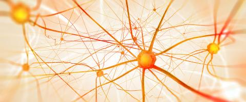 A Milestone in the Search for Schizophrenia's Causes